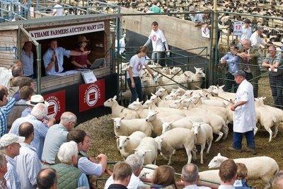 bicester-thame-sheep-market-400x267